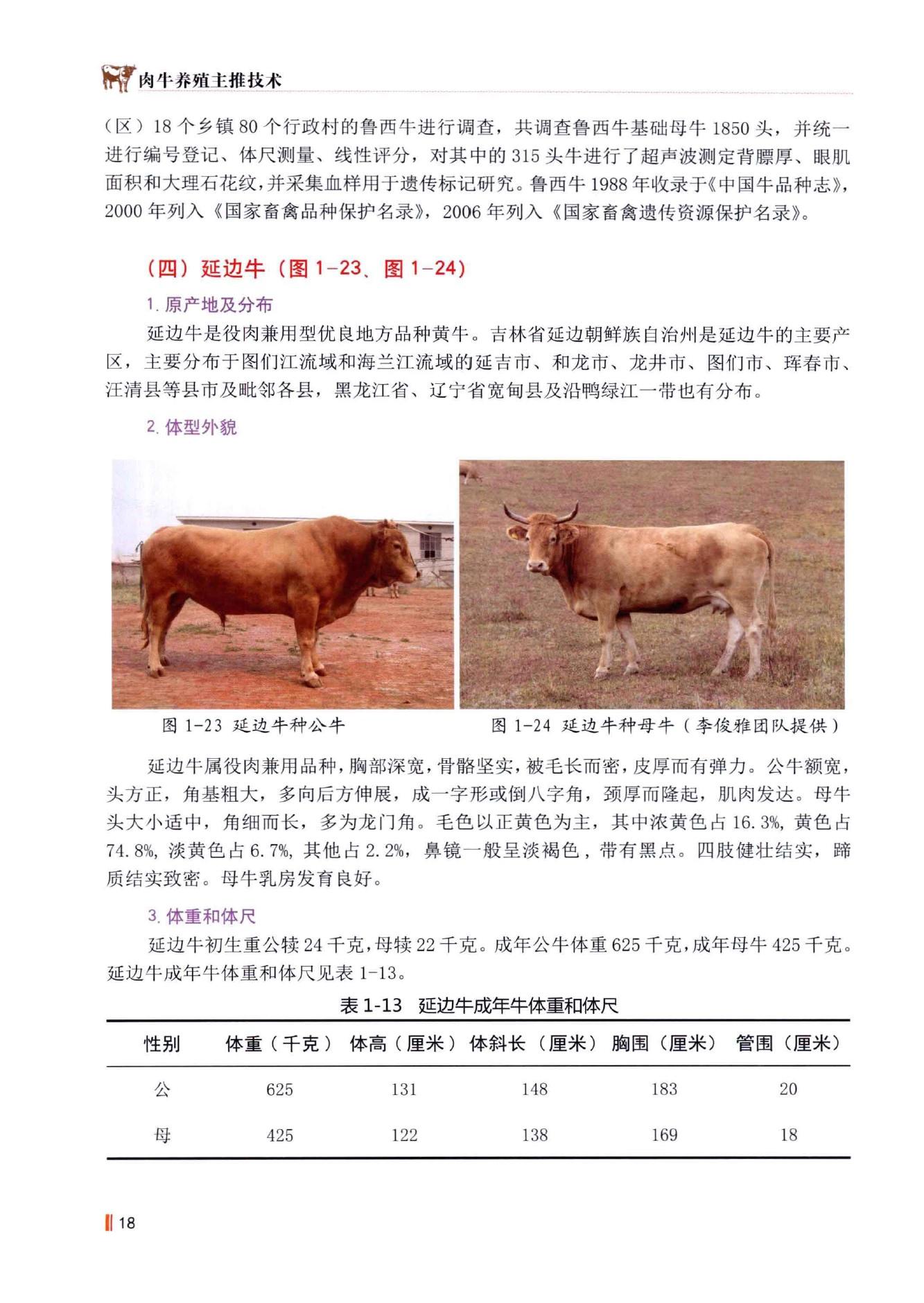 延边牛介绍