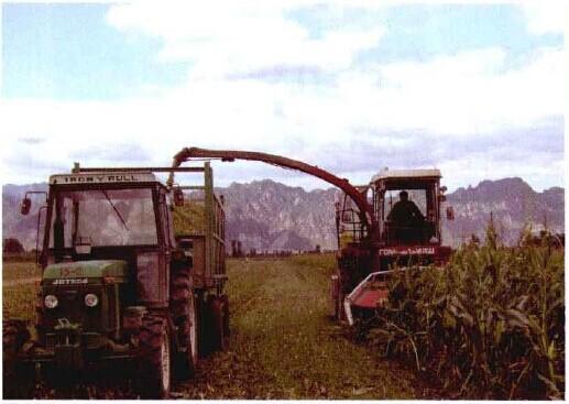 图2-2机械收割全株玉米