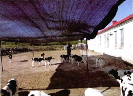 图4-29夏季运动场设遮阳棚