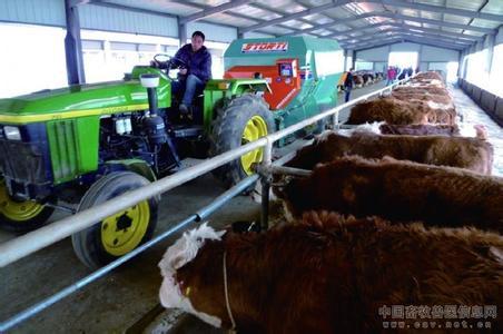 大明农牧科技发展有限公司采用TMR饲喂技术饲喂肉牛