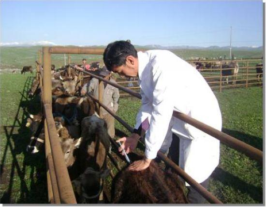 图4-43新疆褐牛冷配点